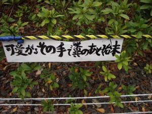 20070227_036_4